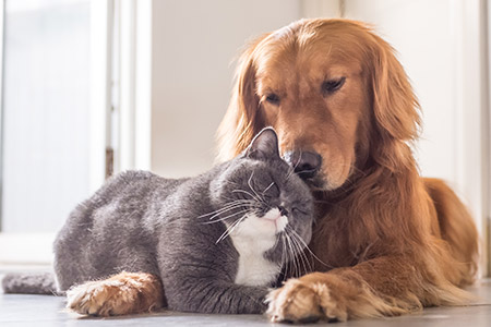 home pets safety