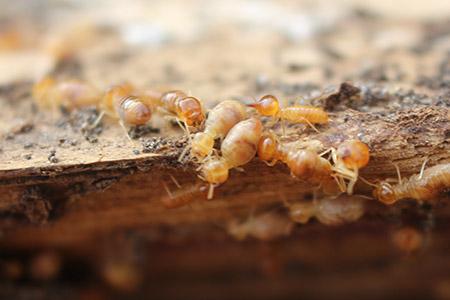 home termite post